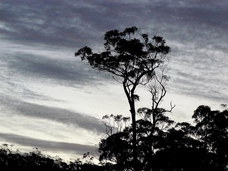 tree-at-dusk