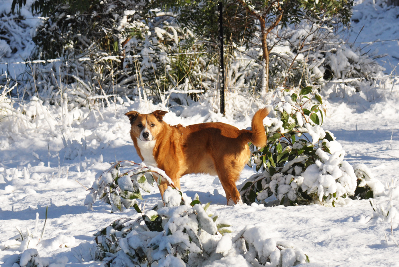 Harry the dog in the snow