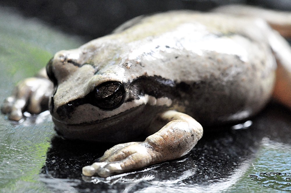 dead frog 1
