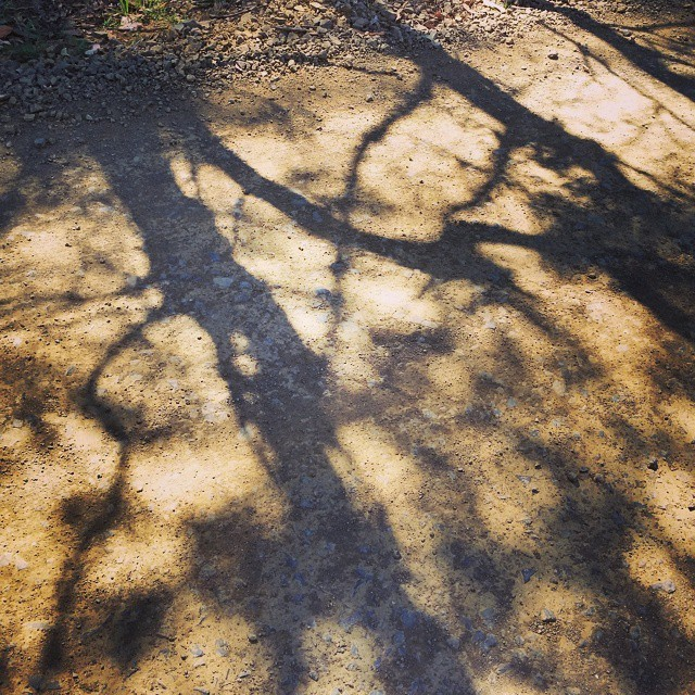 snake shadows