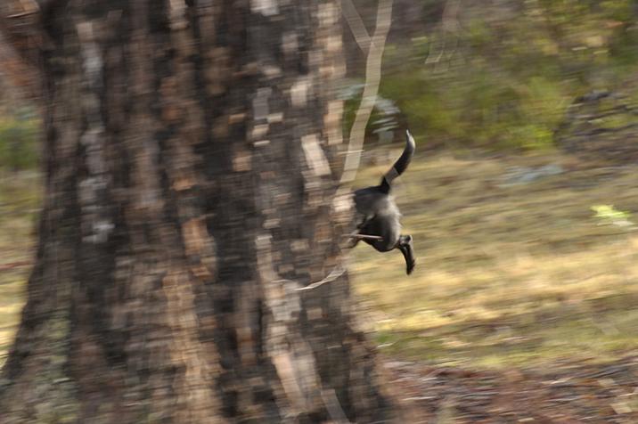 Monty and tree running