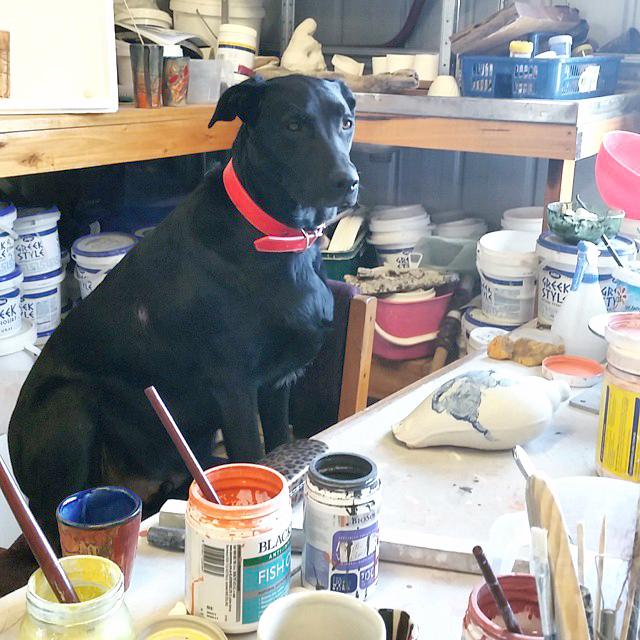 monty studio assistant